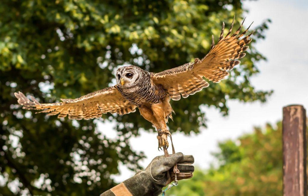 dublin falconry - clayton hotels